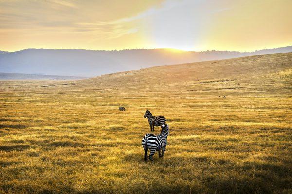 Central Serengeti National Park1