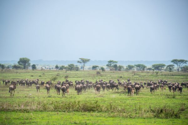 Africa, Tanzania, Sanctuary Kusini