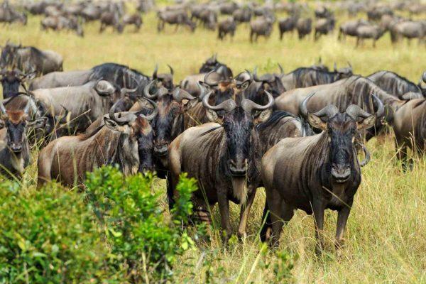 Western Serengeti National Park
