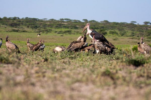 west serengeti